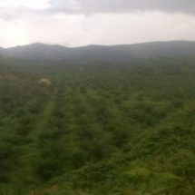 Laporan Peyerobotan Tanah Adat Nifasi Nabire, Papua