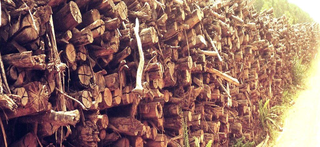 Bangun Kawasan Industri Kayu Di Papua