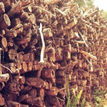 Kebijakan Land Swap Berpotensi Defortasi dari Aceh hingga Papua